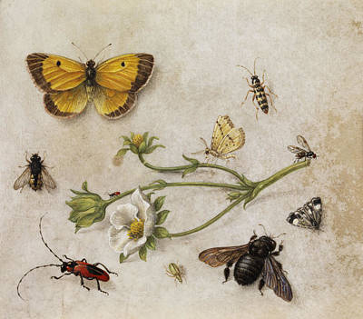 Grasshopper Painting - Flowers, Insects And Butterflies by Jan van Kessel