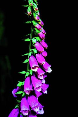 Photograph - Flowers by Jason Brooks