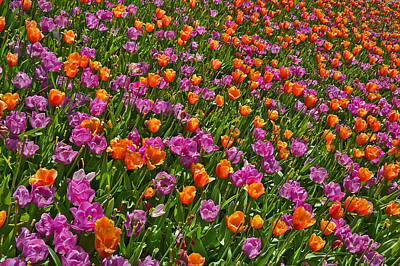 Popstar And Musician Paintings Royalty Free Images - Flowers. Koblenz. Germany. Royalty-Free Image by Andy i Za