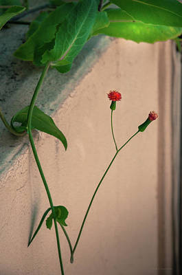 Photograph - Flowers, Leaves And Wall by Frank Mari