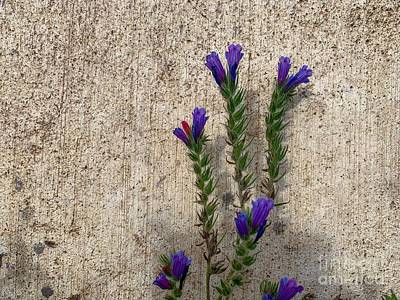 Photograph - Flowers  by Michael Goyberg