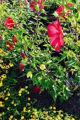 Flowers Of Bethany Beach - Hibiscus And Black-eyed Susams Art Print