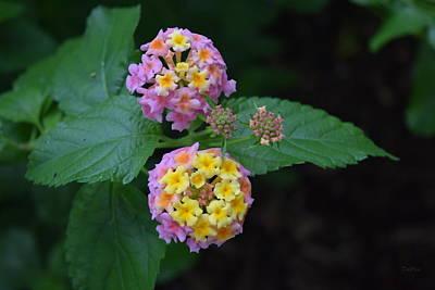 Photograph - Flowers Of Jacksonville by Deborah  Crew-Johnson