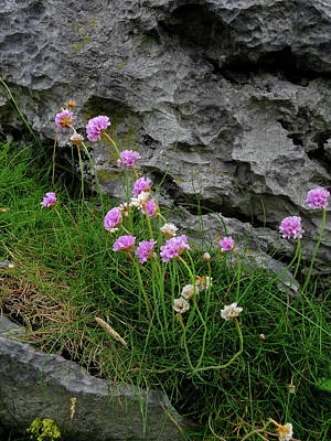 Photograph - Flowers Of The Burren by Jacqueline  DiAnne Wasson