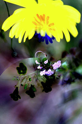 Digital Art - Flowers Of The Dark And Light by Richard Thomas