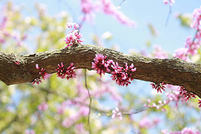 Photograph - Flowers On Branch by Lilian Forsyth