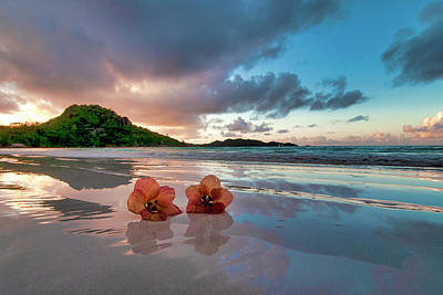 Photograph - Flowers On The Beach by Fabrizio Troiani