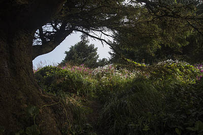 Photograph - Flowers On The Headland by Robert Potts