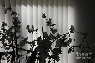 Wall Art - Photograph - Flowers On The Table by Sara Ricer