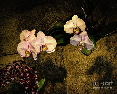 Photograph - Flowers On The Wall by Jon Burch Photography