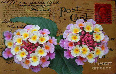 Photograph - Flowers On Vintage 1927 Detroit Post Card by Nina Silver