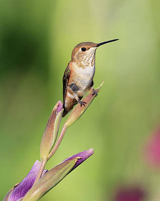 Photograph - Flowers Perch by Steve McKinzie