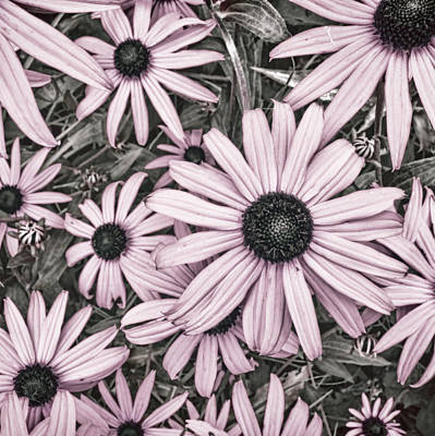 Photograph - Flowers Pink And Gray by Ann Powell