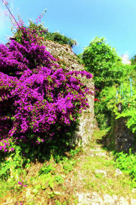 Photograph - Flowers Presented By Corfu by Kay Brewer