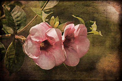Photograph - Flowers - Purple Allamanda 2 by HH Photography of Florida