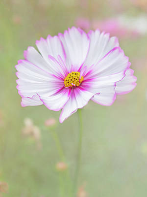 Photograph - Flowers That Are Photogenic. by Usha Peddamatham
