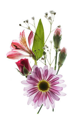 White Background Photograph - Flowers Transparent 1 by Tom Mc Nemar