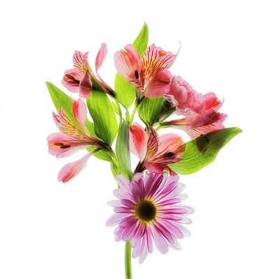 Floral Arrangement Photograph - Flowers Transparent  2 by Tom Mc Nemar
