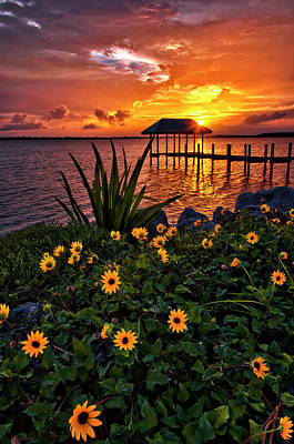 Photograph - Flowers Under The House Of Refuge Pier On Hutchinson Island Florida by Justin Kelefas