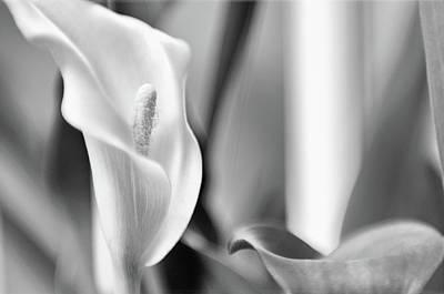 Photograph - Flowers by Venura Herath