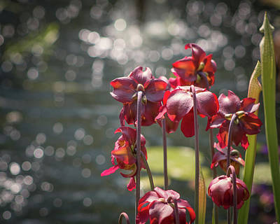Photograph - Flowers Watching Water by Lynne Jenkins