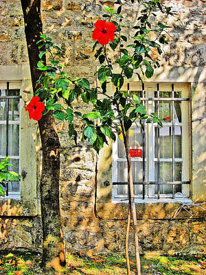 Flowers. Windows. Old Fortress Original