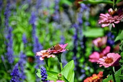 Photograph - Flowerscape by Cornelia DeDona