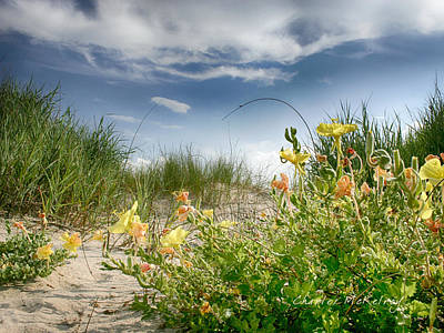 Photograph - Flowery Dunes by Charles McKelroy