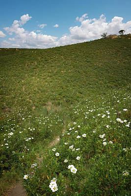 Photograph - Flowery Hills by Carlos Caetano