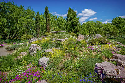 Photograph - Flowery Hillside by Jon Burch Photography