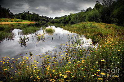 Flowery Lake Art Print