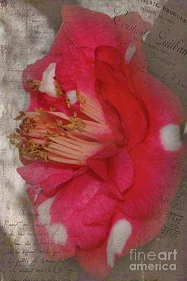 Photograph - Flowery Memory by Judy Hall-Folde