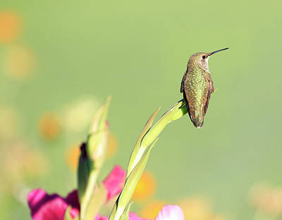 Photograph - Flowery Perch by Steve McKinzie