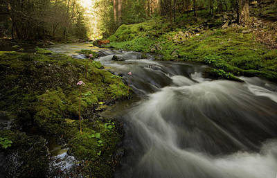 Photograph - Flowing Beauty 2 - Tiger Creek California Sierras by Eleanor Caputo