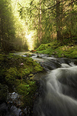 Photograph - Flowing Beauty - Tiger Creek California Sierras by Eleanor Caputo