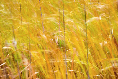 Photograph - Flowing Grass by Leland D Howard