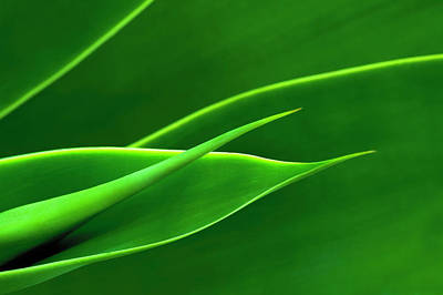 Photograph - Flowing Green by Richard Macquade