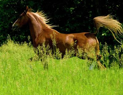 Horses Photograph - Flowing Mane by Michael Barry
