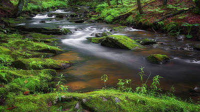 Forest Photograph - Flowing Spring Stream by Bill Wakeley