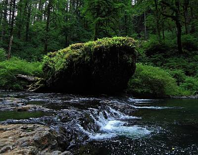 Photograph - Flowing Stream Mossy Perch by Richard Hinds
