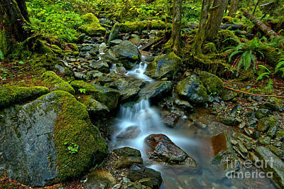 Photograph - Flowing Through Moss And Ferns by Adam Jewell