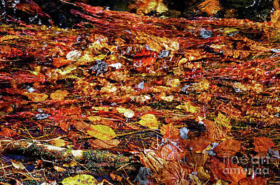 Photograph - Flowing With Fall by Paul Mashburn