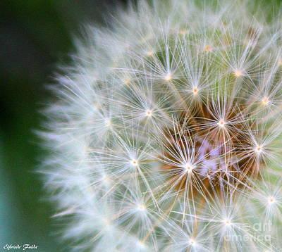 Photograph - Fluff  by Elfriede Fulda