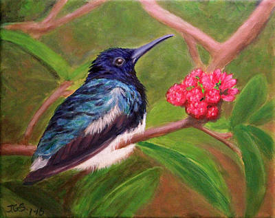Painting - Fluffed Hummer by Janet Greer Sammons