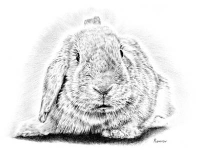 Animals Drawings - Fluffy Bunny by Casey