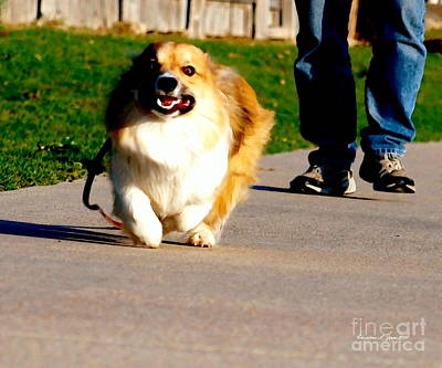 Photograph - Fluffy Corgi - Happy Off Leash - Paintograph by Christine S Zipps