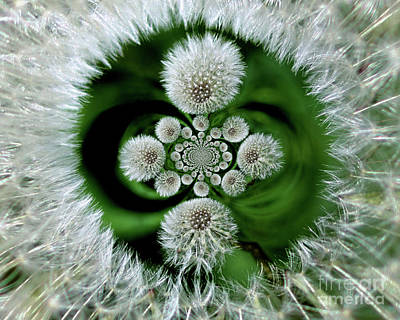 Photograph - Fluffy Dandelion Abstract by Smilin Eyes  Treasures