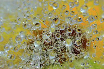 Dandelion Digital Art - Fluffy Dandelion In The Droplets Of Rain  by Yuri Hope