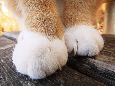 Photograph - Fluffy Paws by Zinvolle Art