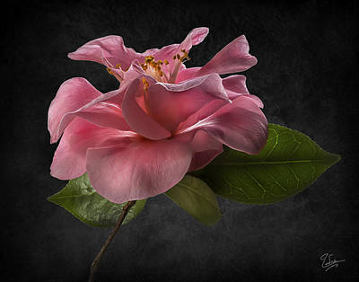 Photograph - Fluffy Pink Camellia 2 by Endre Balogh